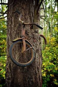 A boy left his bike chained to a tree when he went away to war in 1914. He never returned, leaving the tree no choice but to grow around the bike.