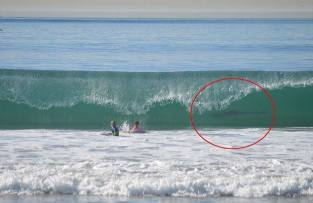 A Manhattan Beach mother captured this rare image of shark through the break of a wave while her son and a friend were out in the water.