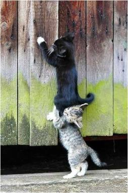 Go .. Go ... Go I am Helping you
