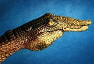 Hand crocodile