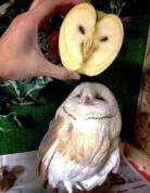 Owl apple