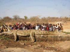 The longest Crocodile