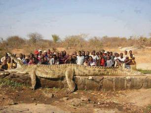 The longest Crocodile