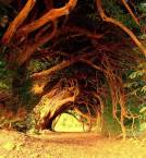 Trees tunnel